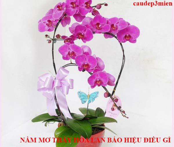 Giải mã giấc mơ thấy hoa lan là điềm báo tốt hay xấu