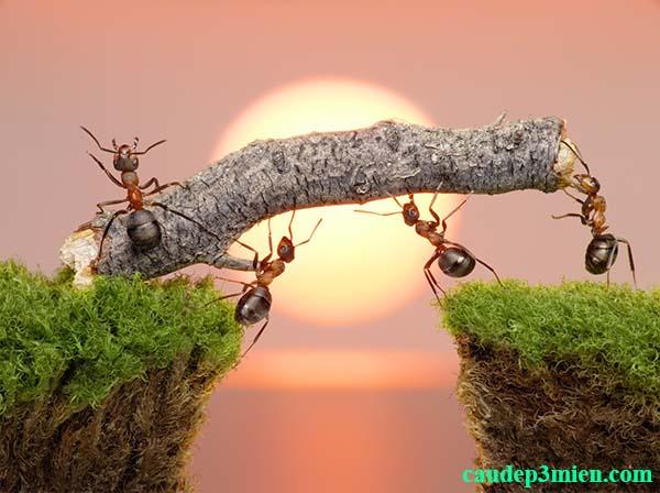 Nằm mơ thấy kiến lửa đánh con gì? 1