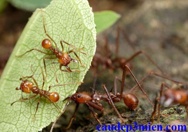 Nằm mơ thấy kiến lửa đánh con gì?