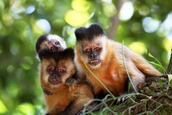 Mơ thấy con khỉ có điềm báo gì?