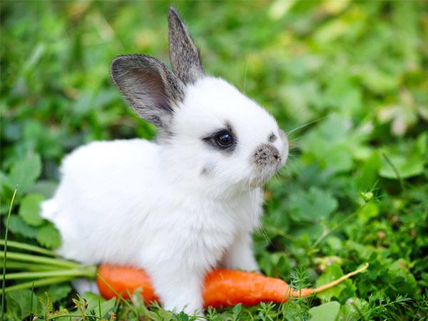 Mơ thấy thỏ có điềm báo gì? đánh số mấy?