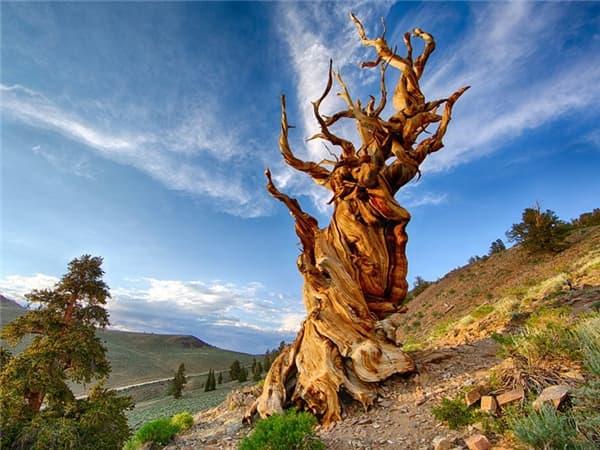 Mơ thấy cây cổ thụ đánh con gì?