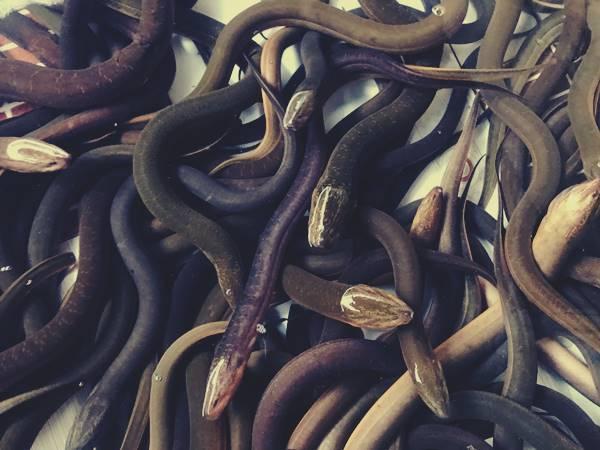 Giải mã bí ẩn giấc mơ thấy con lươn là điềm báo ý nghĩa gì? Đánh con nào