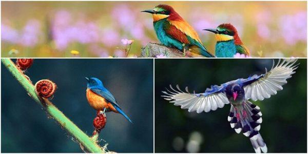 Nằm mơ thấy bắt chim